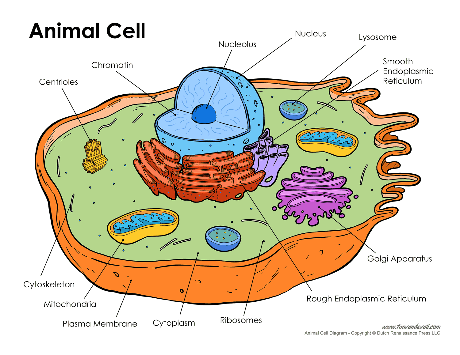 The Animal Cell Diagram With Labels Schematics Wiring Diagram