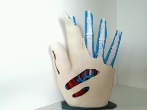 Anatomic Hand (multi material) - V2