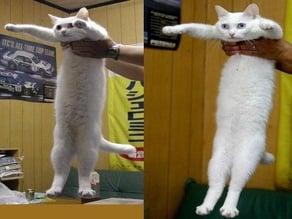 Meme Longcat (balanced)