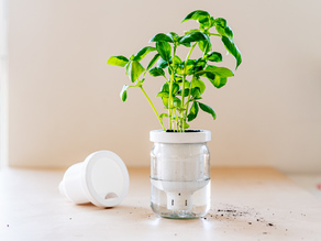Jargar - Self-Watering Planter in a jar