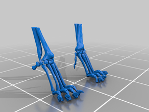Cat Front Paws Skeleton