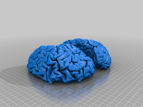 Human Brain Model (PLA Prusa MK3S)