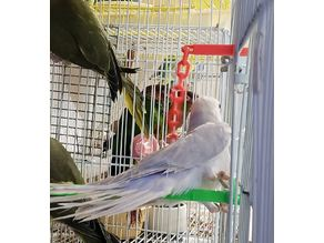 Twist in chain toy for small birds - low support material needed