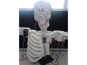 DARA Robot Ribcage Chest
