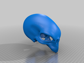 XCOM 2 Sectoid Skull (smooth and hollow)
