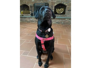 AirTag Dog Collar Holder