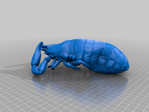 3D Museum Specimens - Scorpions, Pseudoscorpions, Birds, Mites