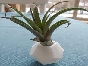 Air Plant Vases