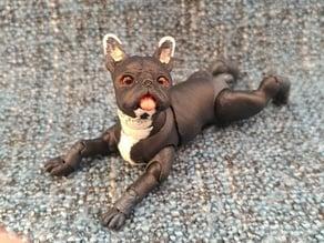 French bulldog (BJD) Renewal
