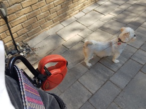 Dog leash to carabiner