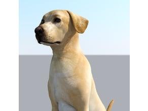 Labrador Dog Realistic Pet Lovers Gift Free Stl