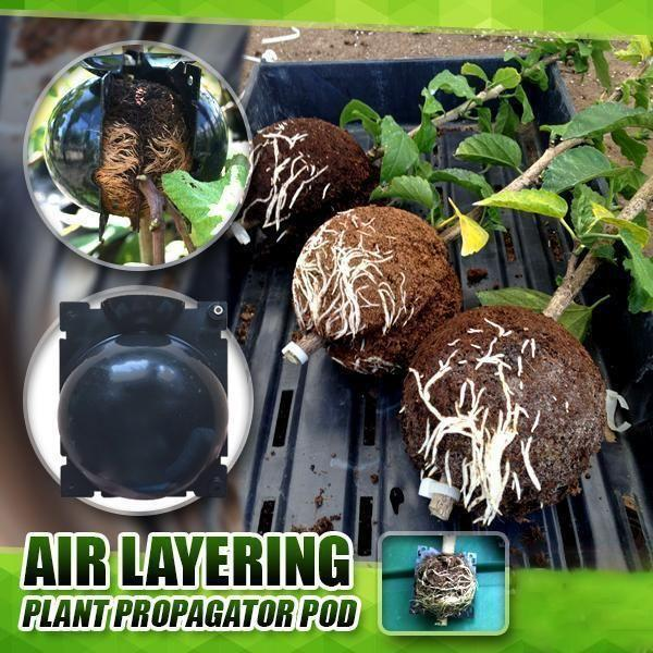 Reusable Plant Root Growing
