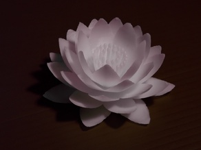nenuphar_flower