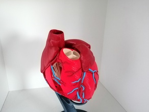 Anatomic Heart (multi material)
