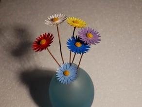 flower Aster