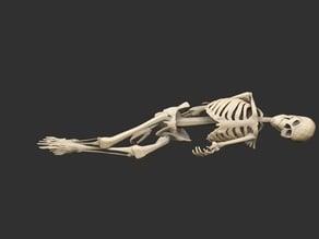 Dead Skeletons Posed x4