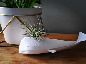 Whale Airplant Holder