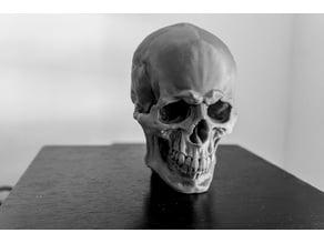 SkullV1.1