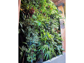 hydroponic Vertical Green wall module in/outdoor