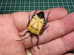 Man-Faced Shield Bug (Catacanthus incarnatus)