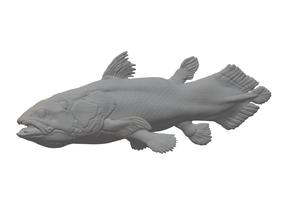Coelacanth (Latimeria chalumnae) 1/35