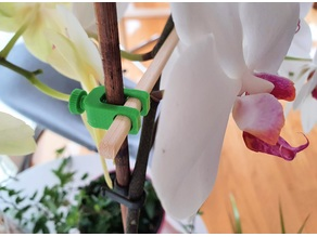 Orchid/plant holder