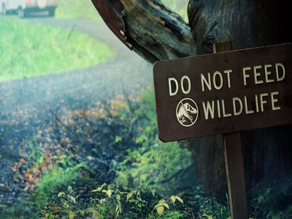 JW - DO NOT FEED WILD LIFE sign