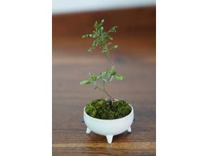 Japanese style self watering mini bonsai pot
