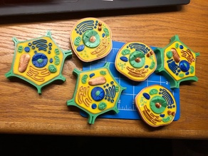 Optimized 4-Color Animal & Plant Cell