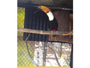 toucan beak prosthesis