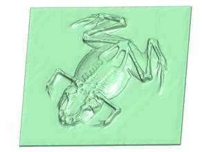 frog low relief (X-ray image)