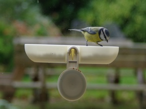 Fågelmatare (Bird feeder secured to window with Ikea suction cup)