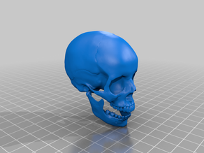 Skull full size, smoothed, printable.