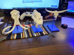 Modified stand for animal skulls (Mammoth skull, Bison latifrons, etc.)