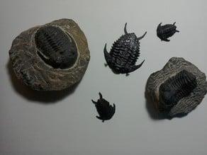 Trilobite Reconstruction