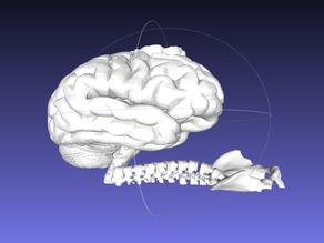 Brain Snail + Tea Light Holder