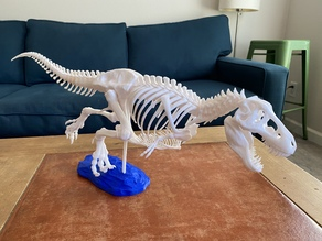 T-Rex skeleton with gastralia (belly ribs) and other anatomical fixes