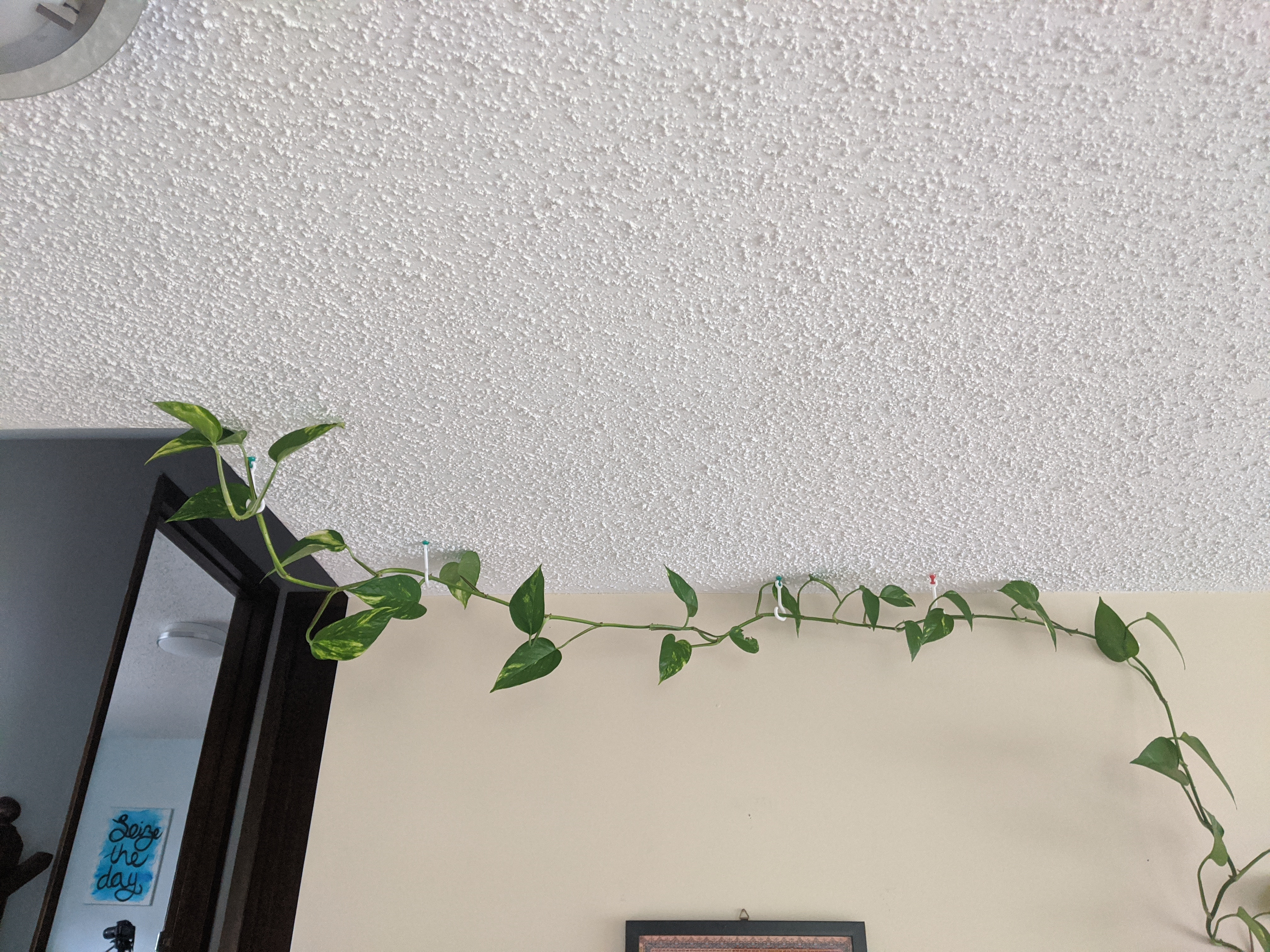 Ceiling Hook for Plants