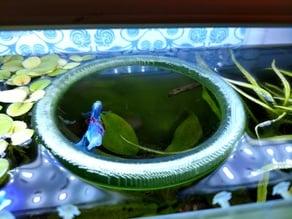 Floating Fish Feeding Ring - Betta Tank