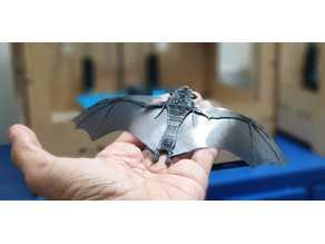 Bat for Coronavirus bats soup