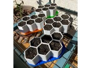 Starter Plant Grower