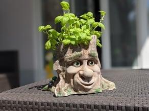 Cartoon-Style Tree Face Planter