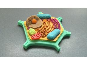 Eukaryotic Vegetal Cell