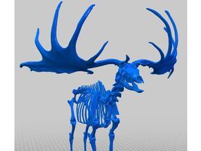 Giant Deer (Skeleton) by Natural History Museum of Vienna