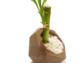Bonny´s Planter