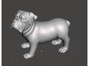 Dog scan Chien