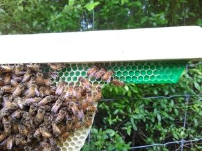 Top Bar hive foundation starter