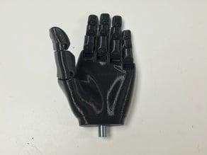 TD_Static Hand