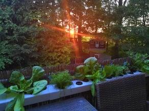 Hydroponic urban gardening system