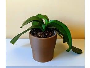 Orchid Pot / Planter